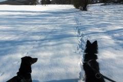 2017-01-26_Agouri_und_Emma_bei_Schneespaziergang