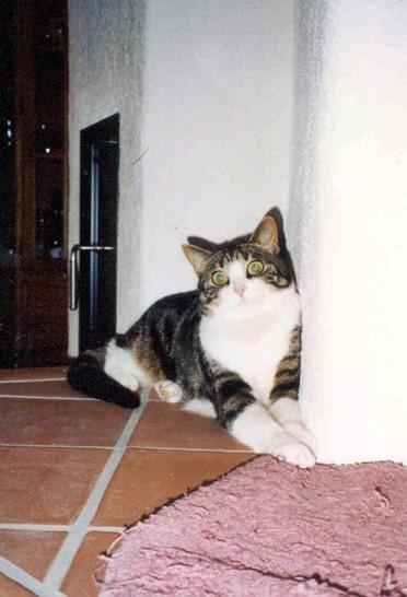 2004-01_Anji_erwärmt_sich