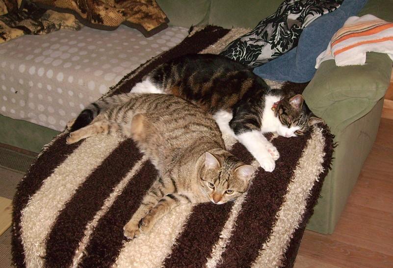 2013-01-03_Anji_und_Krümel_mal_wieder_auf_der_Couch