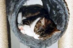 2002-03_Anji_in_der_Schlafröhre
