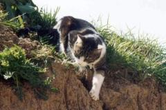 2003-05_Anji_erkundet_das_Gelände