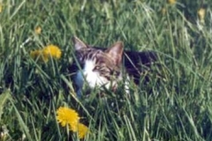 2003-05_Anji_in_der_Blumenwiese