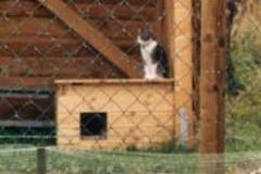 2004-08_Anji_inspitziert_den_Brennholzschuppen