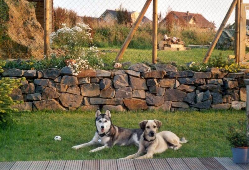 2004-08_Chester_und_Chica_im_Garten