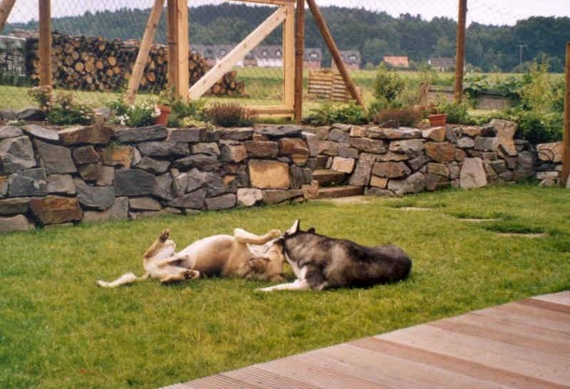2004-10_Chester_und_Chica_toben_im_Garten