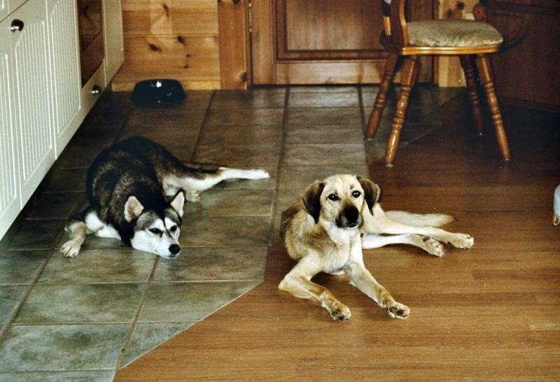 2004-07_Chester_und_Chica_warten_auf_Futter
