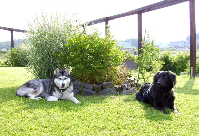 2006-06_Chica_und_Lucky_geniessen_die_Sonne