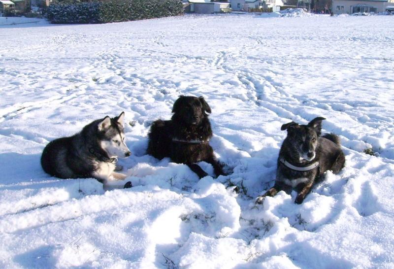 2009-01_Chica_Lucky_und_Lupa_im_Schnee