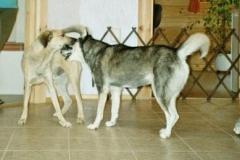2004-07_Chester_und_Chica_toben_im_Flur