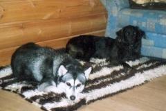 2004-12_Chica_und_Lucky_im_Wohnzimmer