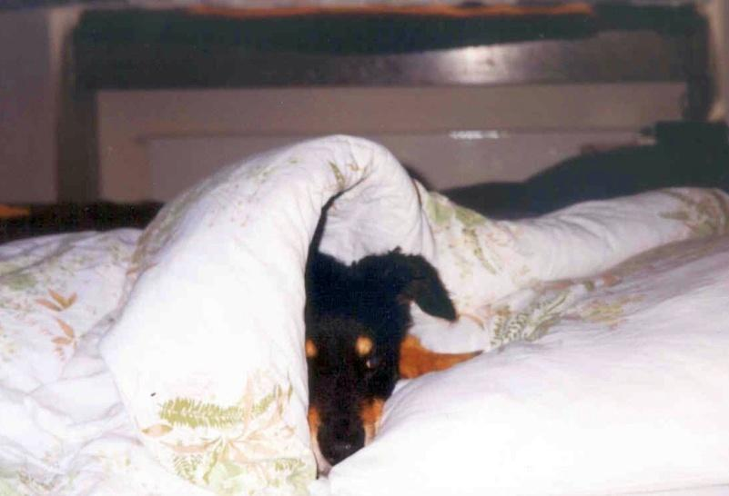 04/98 - Muss ich schon aufstehen?