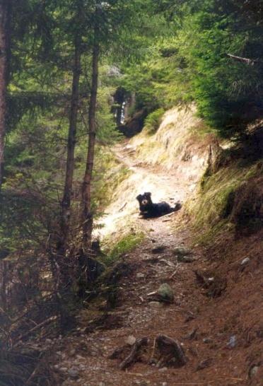 04/01- Waldwanderung