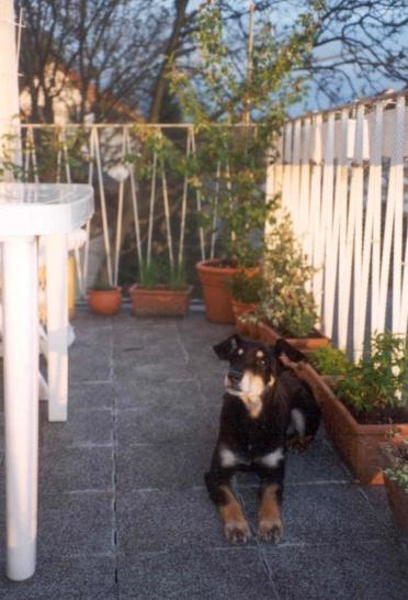 06/01 - auf dem Balkon in Rösrath