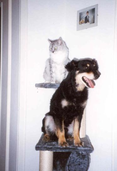 11/01 - Ich bin eine Katze!