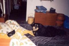 04/98 - Bewachung von Kater Knuddel