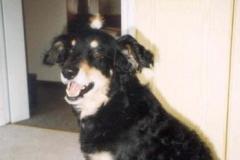 06/98 - mein neuer Federschmuck