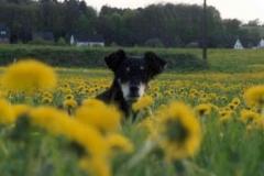05/03 - Das Leben geniessen! (beim Haus in Windeck-Rosbach)