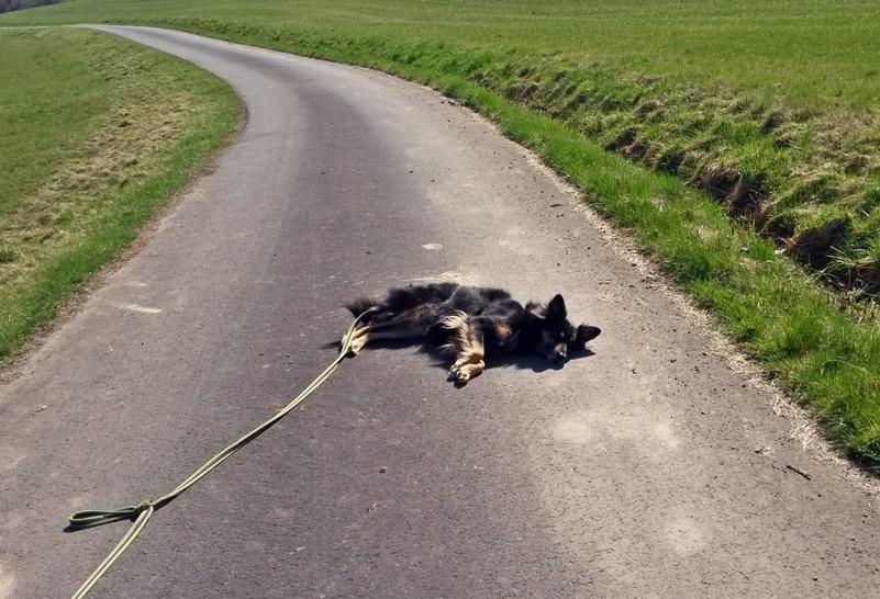 2017-03-28_Emma_spielt_toter_Hund