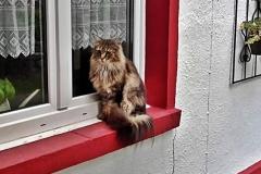 2016-09-14_Gizmo_als_Fensterdekoration