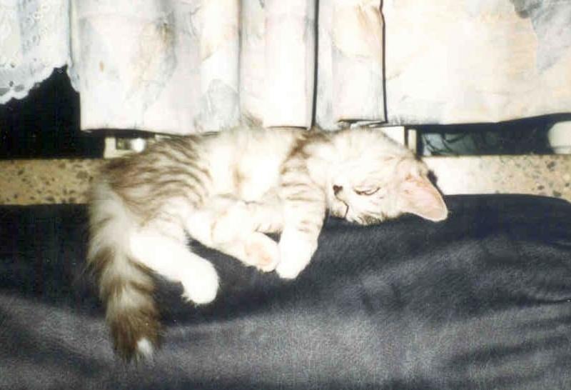 1998-07_klein_Kimba_ist_müde