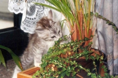 1998-06_klein_Kimi_inspiziert_Blumen