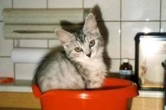 1998-07_Kimba_wird_gewogen
