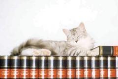 1998-10_Kimba_als_Buchstütze