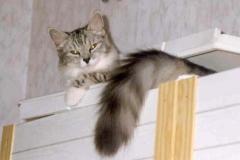 1998-10_Kimbas_Aussichtspunkt