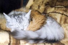 1998-11_Kimbas_wohlverdienter_Schlaf