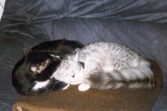 1998-11_Knuddel_und_Kimba_-_Körperpflege