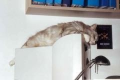 2001-04_Kimbas_Schlafplatz_-_Monitor_2