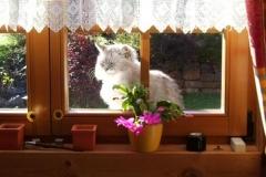 2006-11_Kimba_als_Fensterbankdekoration