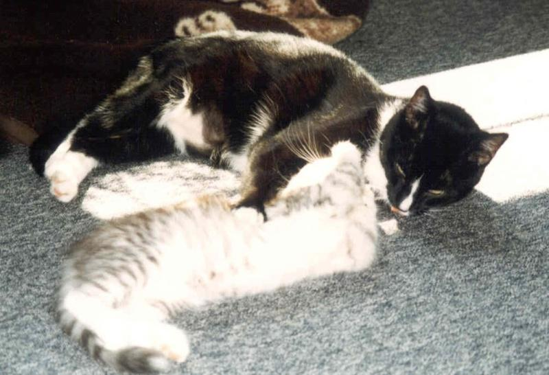 1998-07_Knuddel_und_Kimba_-_Körperpflege