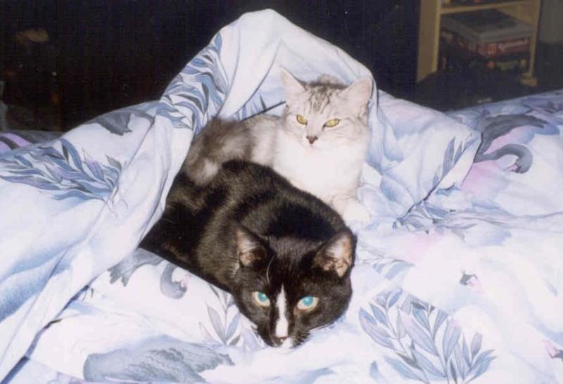1998-11_Knuddel_und_Kimba_-_Bettgeflüster