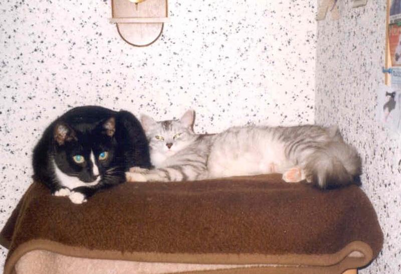 1999-03_Knuddel_und_Kimba_-_Siesta