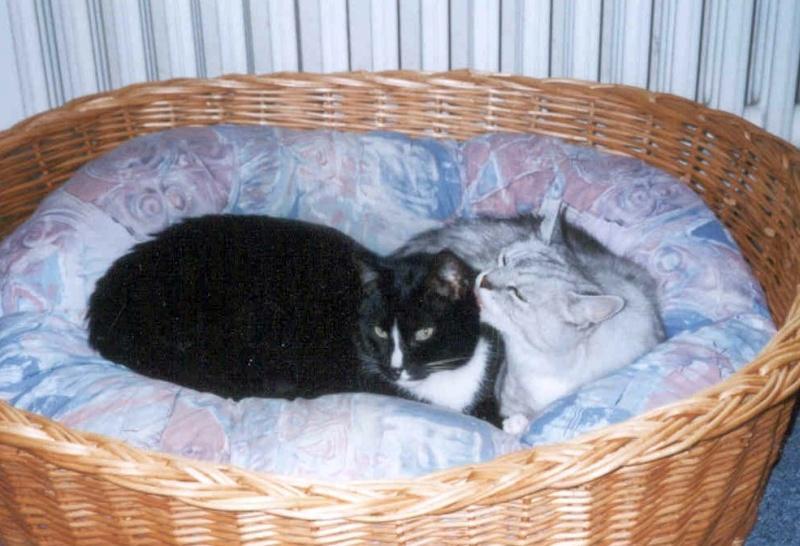 2001-06_Knuddel_und_Kimba_im_Körbchen