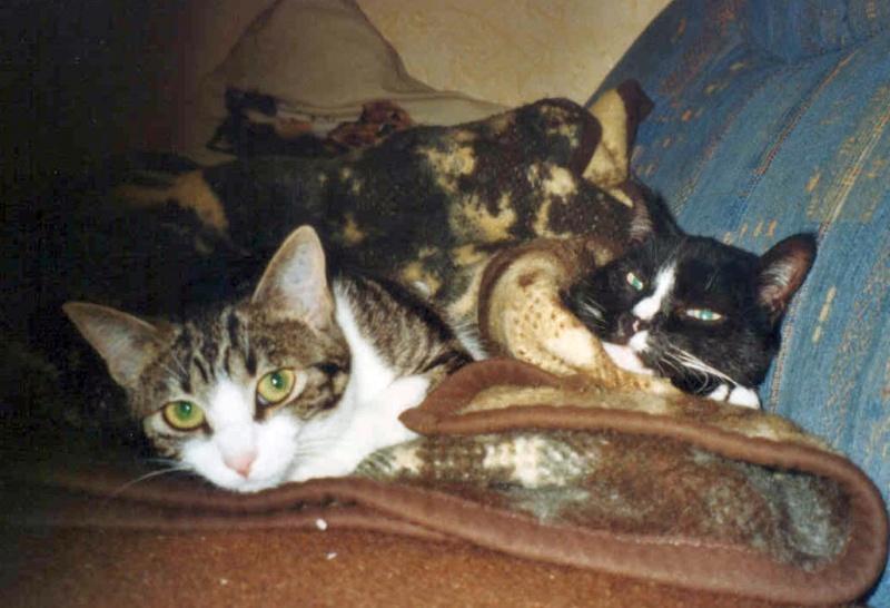 2002-08_Knuddel_und_Anji_kuscheln