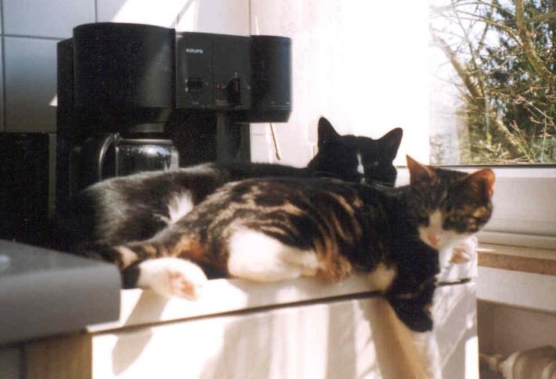 2002-08_Knuddel_und_Anji_sonnen