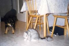 1998-07_Futter_fangen