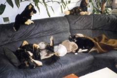 1998-11_Couchtiere