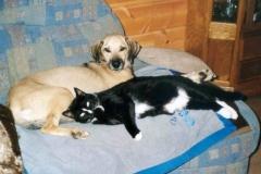 2004-10_Chester_und_Knuddel_auf_Couch_1
