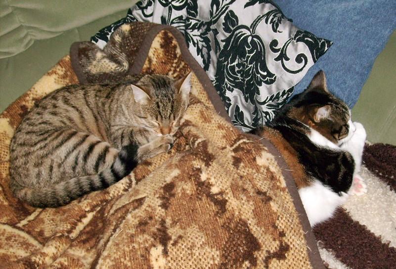 2012-11-20_Anji_und_Krümel_auf_der_Couch
