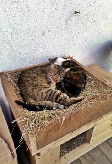 2015-05-09_Anji_und_Krümel_kuscheln_in_der_neuen_Katzenkiste