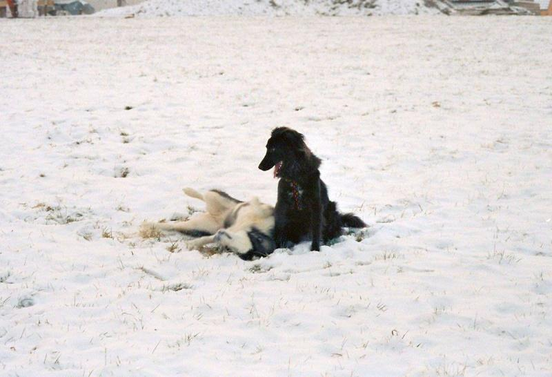 2005-01_Chica_und_Lucky_-_toben_im_Schnee_2