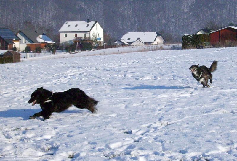 2009-01_Lupa_jagt_Lucky_im_Schnee
