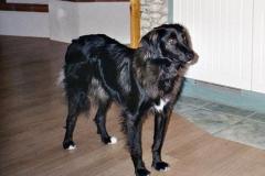 2004-12_Lucky_wartet_auf_Leckerlie
