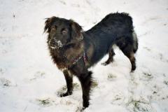 2005-01_Lucky_im_Schnee