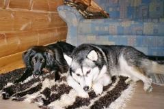 2005-01_Lucky_und_Chica_mit_Leckerlie