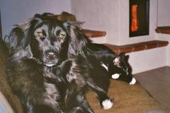 2005-01_Lucky_und_Knuddel_lümmeln_auf_der_Couch