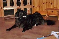 2006-12_Chica_und_Lucky_geniessen_ihr_Weihnachtsgeschenk